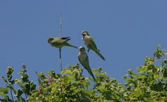 Saving The Wild Parrots Of New Jersey And How You Can Help | Care2 Healthy Living