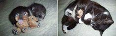 Donos comovem na web com fotos que mostram pets quando filhotes e já adultos