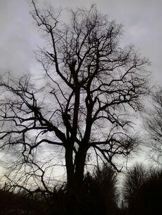 Alter Baum bei Schloss Arf