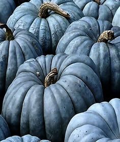 Blue and gray pumpkins Autumn Inspiration, Color Inspiration, Planting Pumpkins, Grow Pumpkins, Pumkin Decoration, Autumn Day, Fall Season, Fall Halloween, My Favorite Color