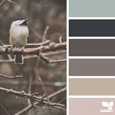 today's inspiration image for { perched tones } is by @julie_audet ... thank you, Julie, for another fresh + inspiring #SeedsColor image share!