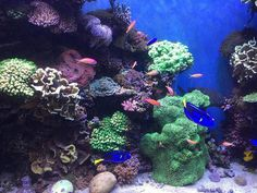 We found #nemo, #marlon and #dory... #montereybayaquarium #montereybay #montereybaylocals - posted by Michael White Jr TheFound8tion https://www.instagram.com/found8tion - See more of Monterey Bay at http://montereybaylocals.com