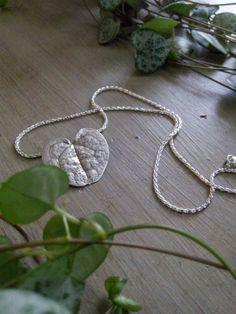 Zilveren blaadje van een vetplantje. ( chinees lantarentje)
