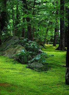 stone hill in moss lawn -hostas on stone hill in moss lawn - Stunning Low Maintenance Front Yard & Backyard Landscaping Ideas I just want this to be my backyard. Moss garden in Giyo-ji temple (祇王寺) Forest Garden, Woodland Garden, Moss Lawn, Moss Grass, Jardim Natural, Landscape Design, Garden Design, Garden Types, Backyard Landscaping