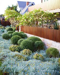 A simply beautiful contemporary Australian native Garden done so well. Garden design Plants supplied by Coastal Landscaping, Landscaping Plants, Outdoor Landscaping, Front Yard Landscaping, Outdoor Gardens, Landscaping Ideas, Landscape Design Plans, Garden Design Plans, Backyard Garden Design