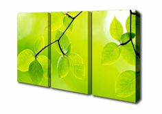 green leaves 3 panel - Google Search