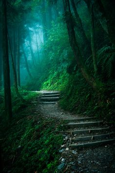 dark forest path. Would love it if my house was at the end of something like this. :)