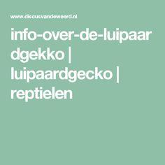 info-over-de-luipaardgekko   luipaardgecko   reptielen