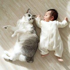 baby_cat051