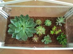 Succulent Terrarium Using Ikea Socker