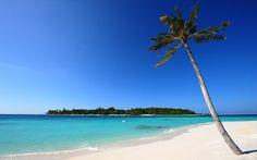 Paisagens, água, praia, mar, oceano, Ilhas, areia, madeira, folhas, palmeiras Vetor