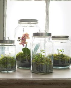 This woodland terrarium would be perfect in my kitchen window :)