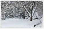 Winter Wonderland by NatureShotsbyAnn on Etsy, $235.00