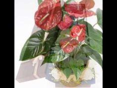 www.ourchinaflower.com 送花到兰州甘肃中国 send flowers to lanzhou China