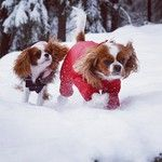 playing in the snow :-)