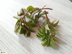 Herbs, Vegetables, Flowers, Plants, Herb, Vegetable Recipes, Plant, Royal Icing Flowers, Flower