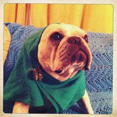 """""""So I think this is the best costume for today."""" - Edith Bouvier Beale as played by Edith the French Bulldog"""