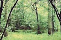 También conocido como bosque deciduo, cubre extensas áreas de Europa y China, América Central, Norteamérica y parte de Sudamérica. Ocupa reg...