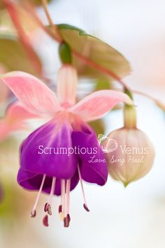 """<3 """"Dance your way through life, only listening to your own unique rhythm."""" <3 #Wisdom #FlowerTherapy   #Quote http://www.scrumptiousvenus.com"""