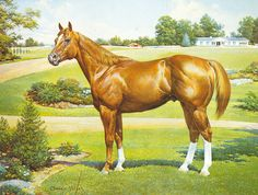 Pedigree for Playboy Chic, photos and offspring from the All Breed Horse Pedigree Database.