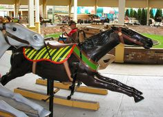 My favorite horse at Cedar Downs (I've named him Cedar Bay) - a bay, of course!  © Gary Nance Date of picture: May 08, 2009