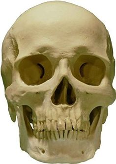 human-skull | bones | pinterest | search, to be and makeup, Skeleton
