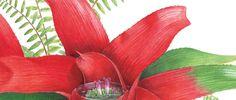 painting bromeliad gouache
