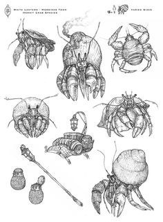 hermit crab drawing - Google Search