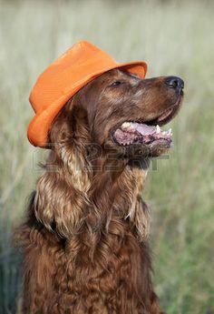 Supporter van oranje.