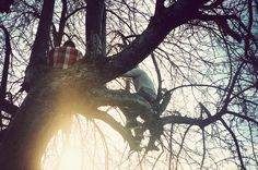 Life in Trees