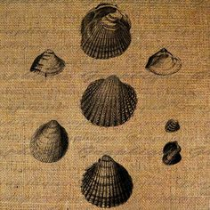 Shells Beach Ocean Shell Digital Image Download by Graphique, $1.00