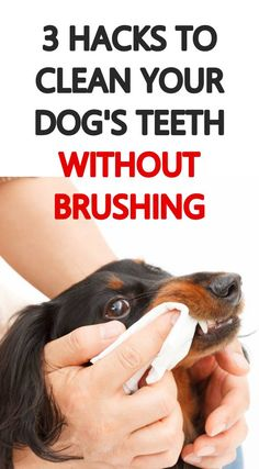 Home dental care is one of the best ways to help keep your dog's teeth healthy. Here are 3 tips for keeping your dog's teeth clean at home without brushing. Dog Care Tips, Pet Care, Pet Tips, Dog Cleaning, Teeth Cleaning, Dental Care, Dental Hygienist, Dog Teeth, Healthy Teeth