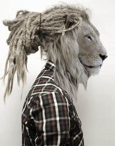 lion with dreads