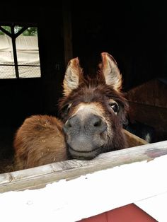 Emily Eastman ~ This is how I get greeted every morning. Our donkeys our blessings to us everyday ❤