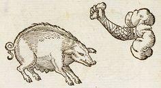 Pictura of Paradin, Claude: Devises heroïques (1557): Si sciens fallo.