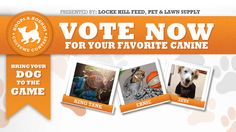Vote for your favorite pup! Vote Now, Your Favorite, Your Dog, Pup, Bring It On, News, Baby Dogs, Puppies, Dog Baby