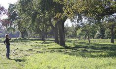 Ein Ausflug zur Rinderherde - Uria e.V. - Garten Fräulein - Der Garten Blog
