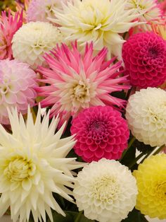 Dahlias.. remind me of my childhood