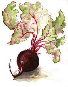 Beetroot Study I | trying something different with bold acry… | Flickr - Photo Sharing!