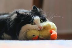 Looks like Sylvester finally got Tweety. :/