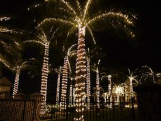 Cayman Christmas Lights! WOW! @camanabay