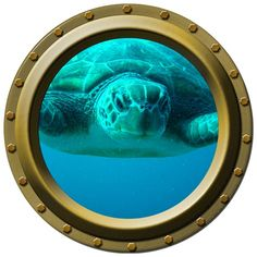 Close Up Sea Turtle Porthole Wall Decal by WilsonGraphics on Etsy, $13.00