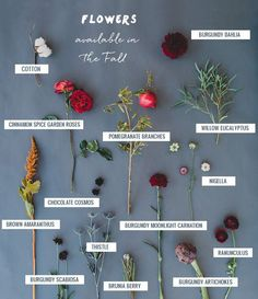 Seasonal Flower Guide: Fall GWS Fall Flower Guide: Cotton Pomegranate Garden Roses Artichokes Dahlias and more! The post Seasonal Flower Guide: Fall appeared first on Easy flowers. Fall Wedding Flowers, Fall Flowers, Autumn Wedding, Floral Wedding, Wedding Bouquets, Wedding Shoes, Wedding Colors, September Wedding Flowers, Wedding Flower Guide