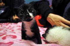 aww i want a baby kitty soooo bad