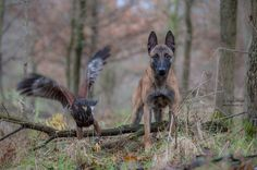 Ingo and friends - Ingo und Else - pictures / @ Tanja Brandt