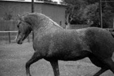Wildwych Lantana, photo by Kaelin