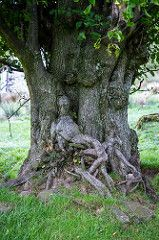 Lady in the tree. Enchanted tree near Dent in England. Weird Trees, Enchanted Tree, Tree People, Tree Faces, Unique Trees, Old Trees, Nature Tree, Tree Art, Amazing Nature