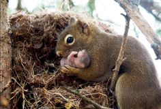 Now you've seen a baby squirrel.