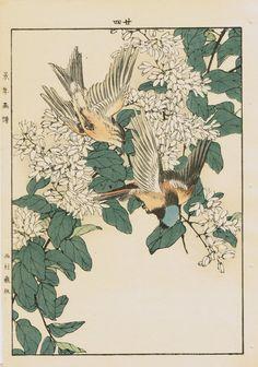 Imao Keinen : Deutzia, Mugimaki Flycatcher at Davidson Galleries Japanese Art Styles, Traditional Japanese Art, Japanese Prints, Japanese Bird, Japanese Art Modern, Botanical Drawings, Botanical Art, Art And Illustration, Illustrations
