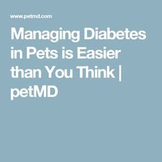 Managing Diabetes in Pets is Easier than You Think | petMD